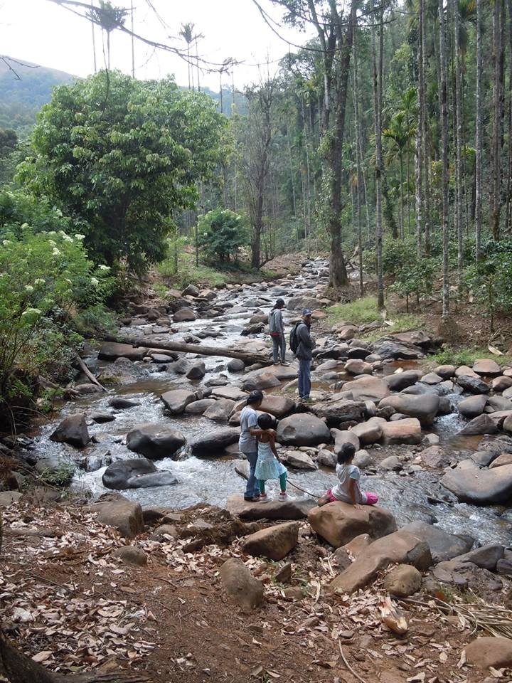 Sringeri Mountain Stream