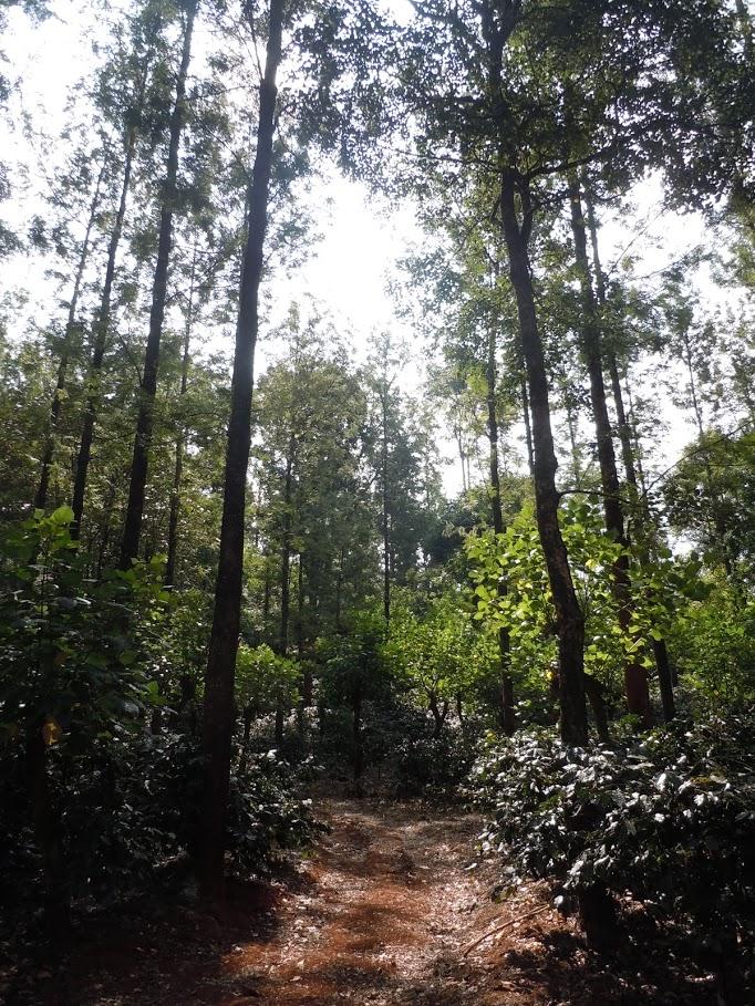 Coffee Plantation Trekking path